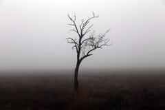 Osamotniony drzewo w jesień dniu w Crimea Zdjęcia Stock