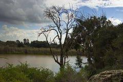 Osamotniony drzewo w Jeziornym Yakum, Izrael Zdjęcia Stock