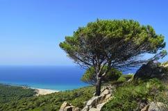 Osamotniony drzewo w kontraście z niebieskim niebem fotografia stock