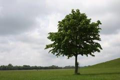 Osamotniony drzewo w krajobrazie Obrazy Royalty Free