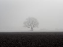 Osamotniony drzewo w mgle za polem Zdjęcie Stock