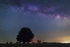 Osamotniony drzewo w Milky sposobie zdjęcie stock