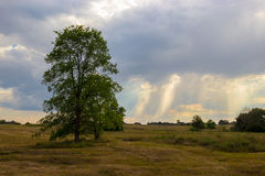 Osamotniony drzewo w polu Zdjęcie Stock