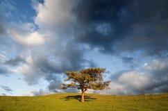 Osamotniony drzewo w polu i chmurnym niebie Zdjęcie Royalty Free
