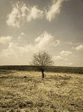 Osamotniony drzewo w polu piękny krajobrazowy fotografia skutek Fotografia Royalty Free
