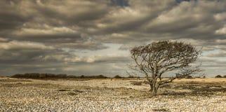 Osamotniony drzewo w pustyni skały obrazy royalty free