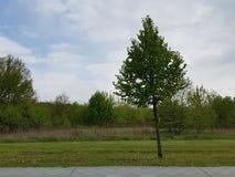 Osamotniony drzewo w wieczór zdjęcia royalty free