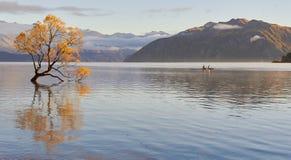 Osamotniony drzewo Wanaka, Nowa Zelandia zdjęcie stock