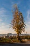 Osamotniony drzewo z Barcelona pejzażem miejskim na tle Zdjęcie Stock