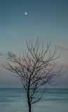 Osamotniony drzewo z księżyc Fotografia Royalty Free