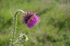 Osamotniony Dziki kwiat Fotografia Stock