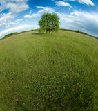osamotniony horyzontu wyginający się drzewo Obraz Stock