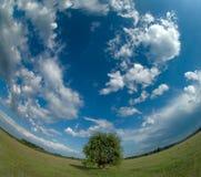 osamotniony horyzontu wyginający się drzewo Zdjęcia Stock