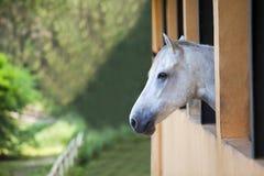 Osamotniony koń Obrazy Royalty Free