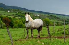 Osamotniony koń Zdjęcia Royalty Free