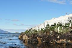 Osamotniony kormoran obraz stock