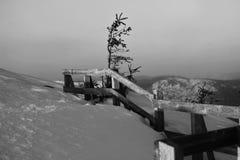 Osamotniony królewiątko góra Zdjęcia Royalty Free