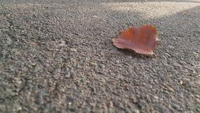 Osamotniony liścia lying on the beach przy asfaltową drogą w parku obraz royalty free