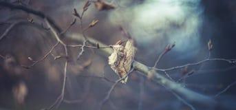 Osamotniony liść na drzewie Zdjęcie Royalty Free