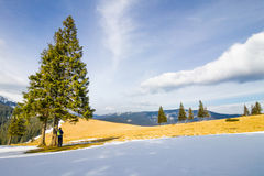 Osamotniony mężczyzna stoi pod sosnami w jaskrawej wygranie w górach Zdjęcia Stock