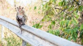 Osamotniony małpi waitng dla przyjaciela Fotografia Stock
