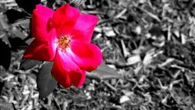 Osamotniony Mały kwiat obraz royalty free