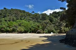 Osamotniony namiot po środku zaniechanej plaży z dżunglą w tle jako symbol samotność Obraz Royalty Free