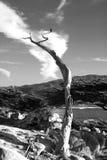 Osamotniony nieżywy drzewo fotografia stock