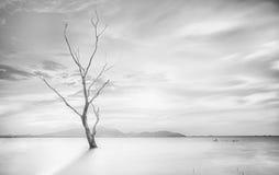 Osamotniony nieżywy drzewo Obraz Royalty Free