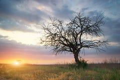 Osamotniony nieżywy drzewo Obrazy Stock