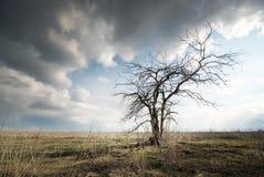 Osamotniony nieżywy drzewo Fotografia Royalty Free