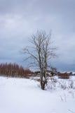 Osamotniony nieżywy drzewo Zdjęcia Royalty Free