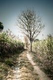 Osamotniony nieżywy drzewo, sztuki natura Zdjęcie Stock