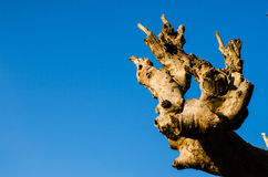 Osamotniony nieżywy drzewo Sztuki natura Obraz Stock