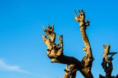 Osamotniony nieżywy drzewo Sztuki natura Fotografia Royalty Free