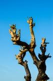 Osamotniony nieżywy drzewo Sztuki natura Zdjęcia Royalty Free
