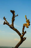 Osamotniony nieżywy drzewo Sztuki natura Obrazy Stock