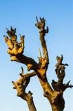 Osamotniony nieżywy drzewo Sztuki natura Zdjęcie Royalty Free