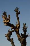 Osamotniony nieżywy drzewo Sztuki natura Obrazy Royalty Free