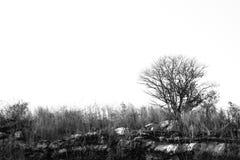 Osamotniony nieżywy drzewo Sztuki natura Zdjęcie Stock