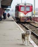 Osamotniony pies Zdjęcie Stock