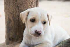 Osamotniony pies. Obrazy Stock