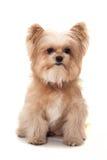 Osamotniony pies Obraz Stock