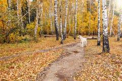 Osamotniony pies na ścieżce Obraz Stock
