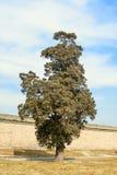 osamotniony plenerowy drzewo fotografia royalty free
