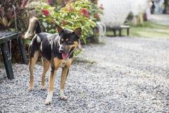 Osamotniony przybłąkany pies Obraz Royalty Free