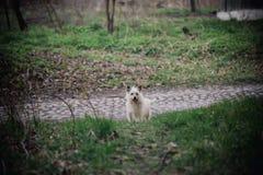 Osamotniony psi siedzący plenerowy Śliczny mały cur na natury tle przyjaźń samotność i oddanie Zdjęcie Stock