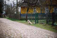 Osamotniony psi siedzący plenerowy blisko domu Fotografia Stock