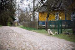 Osamotniony psi siedzący plenerowy blisko domu Zdjęcia Royalty Free