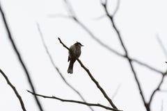 Osamotniony ptak Obrazy Royalty Free